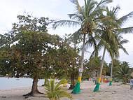 Coqueiros na praia de coroa vermelha