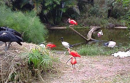 ZooParque Itatiba - Flamingos
