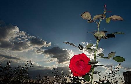 City tour - Roseirais e campos floridos estão no roteiro