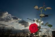 Roseirais e campos floridos estão no roteiro