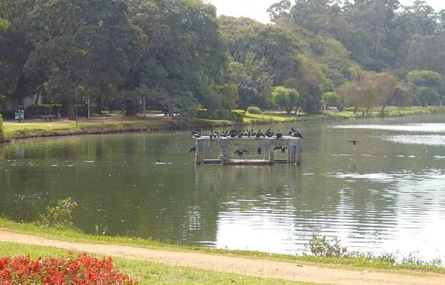 Lago com patos