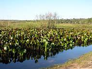 Passeio ao Pantanal dos Marimbus. Espetáculo da natureza!