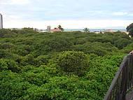Vista panorâmica da árvore, cobrindo 8.500 m²