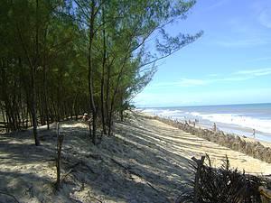 Guriri: Praia tem até um bosque!  -