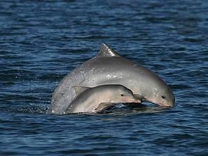 Baía dos Golfinhos: Visitantes ilustres são observados com frequência -