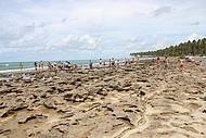 Cal�ada de corais exposta com a mar� baixa