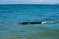 Baleias - Markito