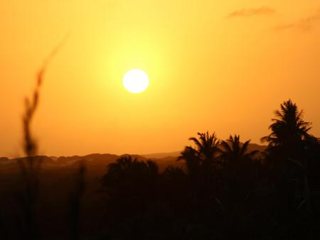 Revoada dos guarás ao pôr do sol - Pôr do sol é sempre um espetáculo