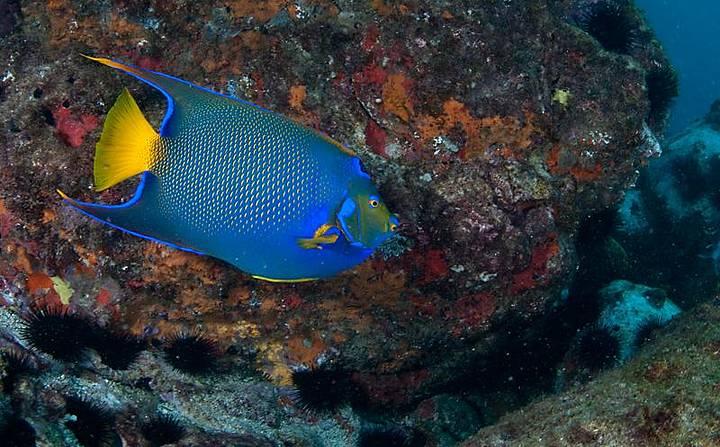 Fundo do mar é repleto de cores e belezas