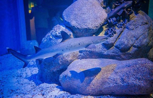 Será possível até mergukhar com os tubarões!