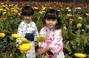Colônia japonesa: Flores e muitas cores!<br>