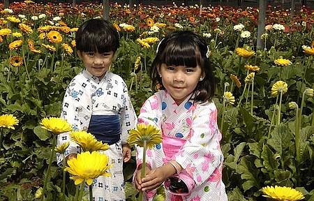 Colônia japonesa - Flores e muitas cores!
