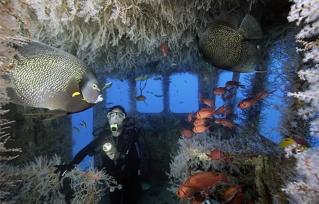 Mergulho em Recife (PE)
