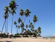 Coqueiros enfeitam a praia