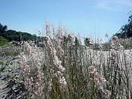 Vegetação que cerca a lagoa