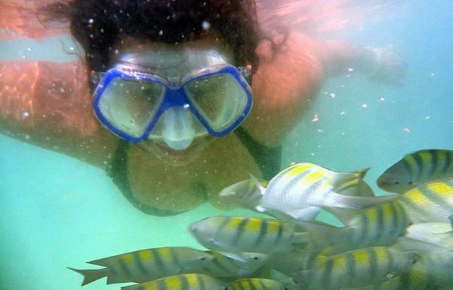 Foto com os peixinhos