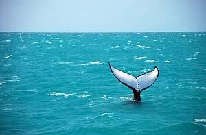 Aberta a temporada para avistar baleias