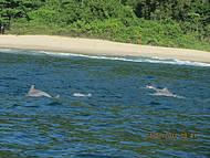 Golfinhos, é pela manhã que consegue ve-los quando se tem sorte.