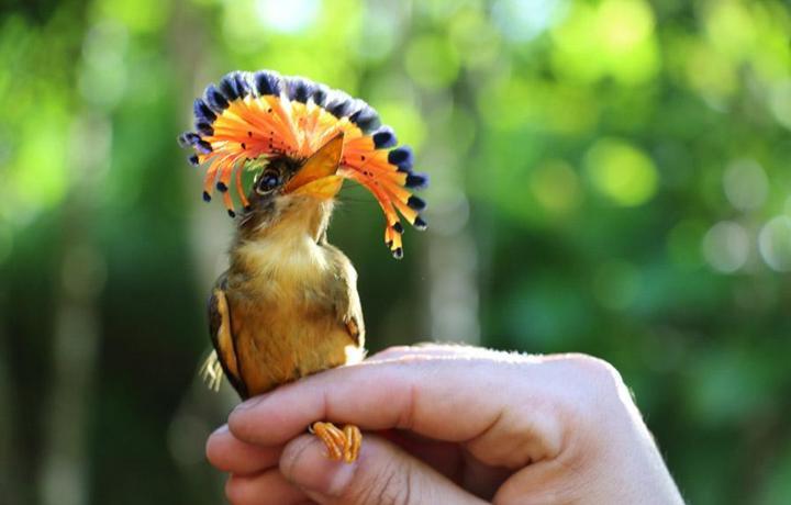 Pássaros encantadores são observados na natureza