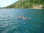 Golfinhos. Legal � chegar bem perto!