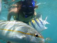 Muitos Peixes