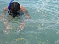 Piscinas naturais - Mergulho com os peixes