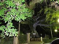 Figueira Centenária à noite