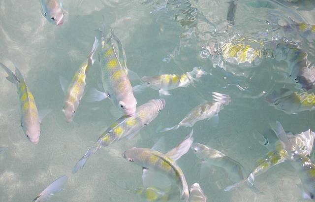 Peixinhos nas piscinas de Paju�ara
