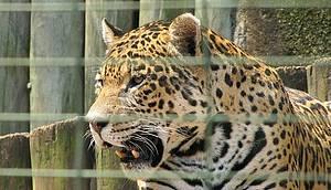 Parque Ecológico - Mais de 500 animais dão vida ao espaço