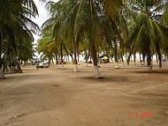 Coqueirais na Praia do Gunga