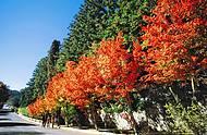 Cores inusitadas marcam a paisagem quando chega o outono