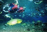 Dourados, piraputangas e mergulhadores dividem espa�o em harmonia