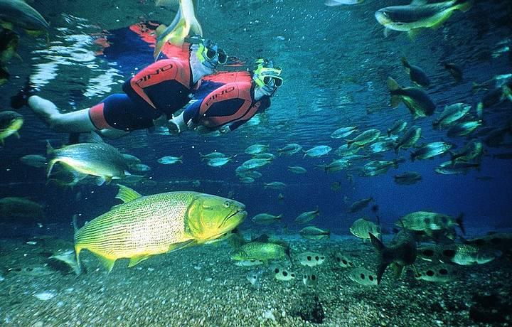 Dourados, piraputangas e mergulhadores dividem espaço em harmonia
