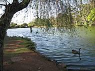 Uma tarde de sol e calor num oasis dentro de S�o Paulo
