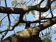 Micos soltos nas árvores do Parque