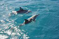 Os golfinhos de Noronha!