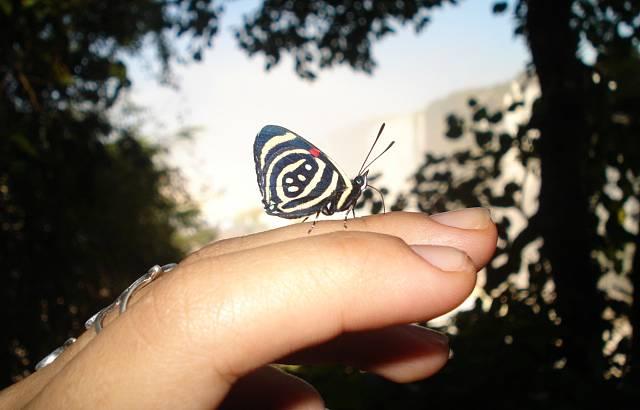 Uma obra de arte da natureza ... bem aqui na ponta dos meus dedos...