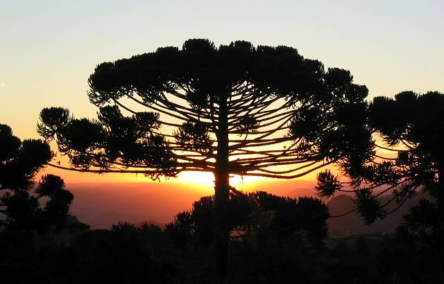 Ponto alto do pôr-do-sol