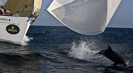 Golfinhos acompanham embarcações e dão show à parte
