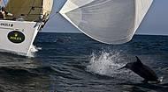 Golfinhos acompanham embarca��es e d�o show � parte