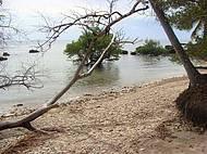 Caminho para a praia do Moreré