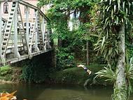 Garotos Nativos Pulam do Alto da Ponte e Mergulham no Rio...