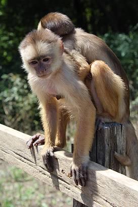 Interação com Macacos