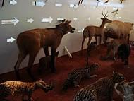 Animais da Nossa Fauna