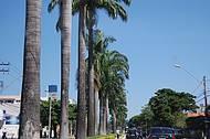 Avenidas largas e arborizadas de uma capital moderna