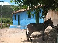 Aluguel de mulas é opção na hora do cansaço