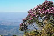 Essa é apaisagem lá do alto do Pico, com seus 1.700m de altitude