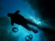 Mergulho autônomo revela maravilhas