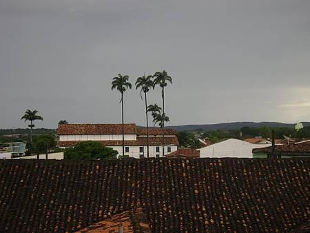 Palmeiras imperiais - Da minha janela....
