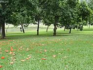 Passeio ao Parque do Ibirapuera